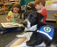 photo of Homer the therapy dog at Himmel Park Library
